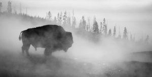 fog horns